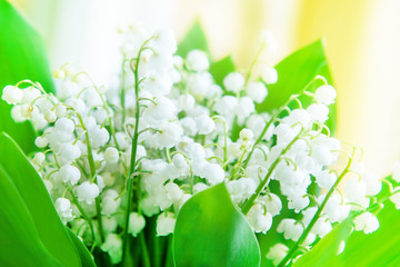 Lily of the valley. Flowers. May.