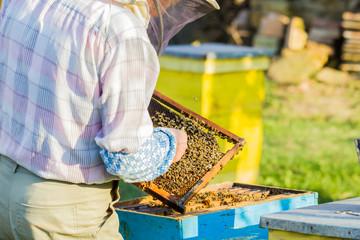 Beekeeper checking hive