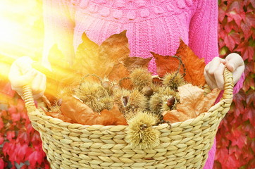 Autumn chestnuts and leaves in the basket