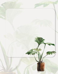 Houseplants. Green plant background