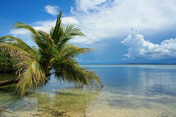 Coconut tree leaning over the Caribbean sea