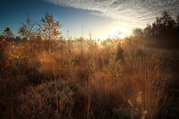 sunrise over marsh during misty autumn morning