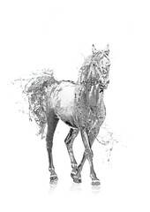 Horse and water