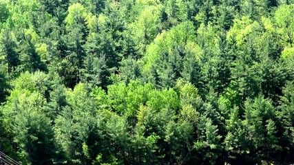 Forest, Woods, Trees, Foliage, Nature, Natural