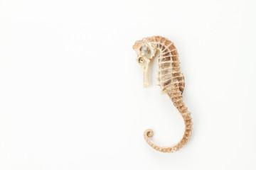 sea horse little fish skeleton