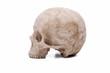 canvas print picture - Human skull model