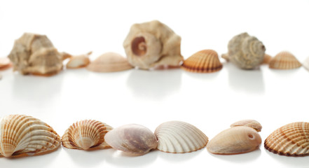 line of different sea shells