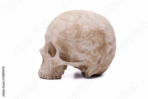 canvas print picture Human skull model