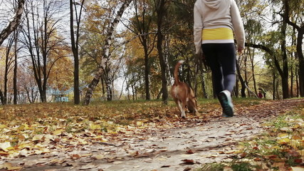 Girl  walk about  with beagle puppy in autumnal park