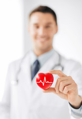 male doctor holding red heart with ecg line