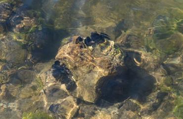 Crustacés sur rocher