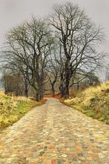 Krajobraz wiejski, Jesień, droga