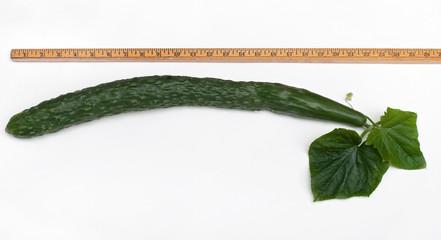 Measured English Cucumber