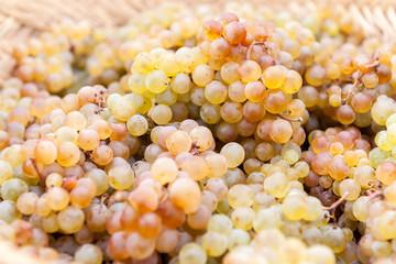 Canasto de uvas