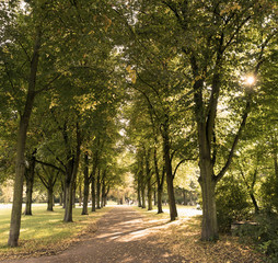 Baumallee im Stadtpark Magdeburg