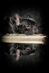 french bulldog reflection