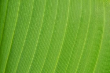 Green leaf textured background