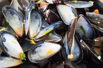 Empty mussel shells