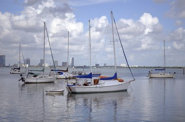 Sailboats On A Florida Waterway