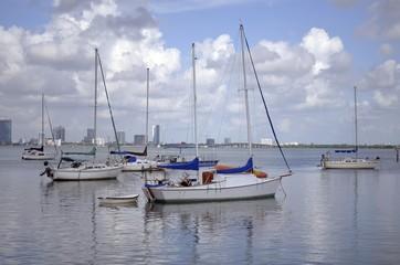 Sailboats On A Florida Waterway