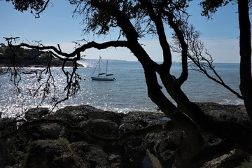 Bateau au bord de la mer avec silhouette d'arbre