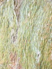 Pastel abstract painting by eucalyptus tree bark