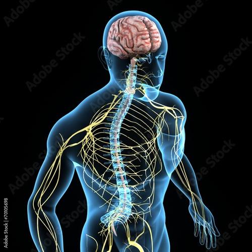 Leinwandbild Motiv Nervous system