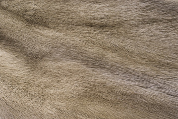 Mink fur for use as a background texture
