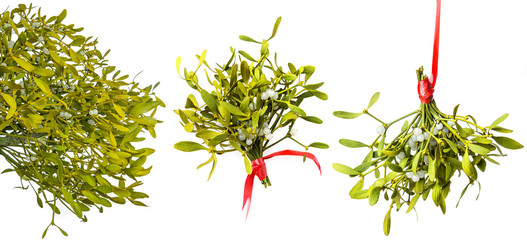 mistletoe isolated on a white background