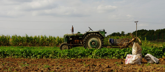 tractor potatoe harvest