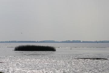 Watt an der Elbe im Gegenlicht