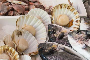 Sea bream and sea scallops