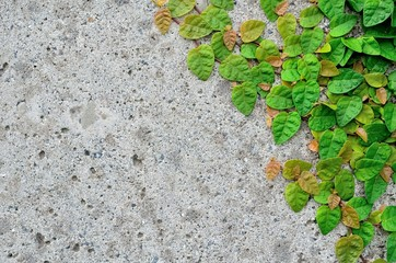 コンクリート壁と葉っぱ