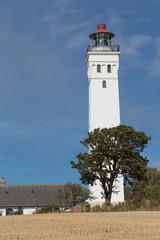 Leuchtturm und Baum