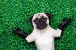 yoga dog