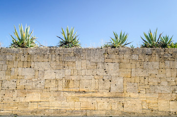 Dry stone wall (Island of Pianosa, Italy)