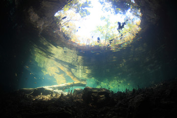 Entrance area of freshwater cave