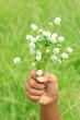 Hand holds white globe amaranth