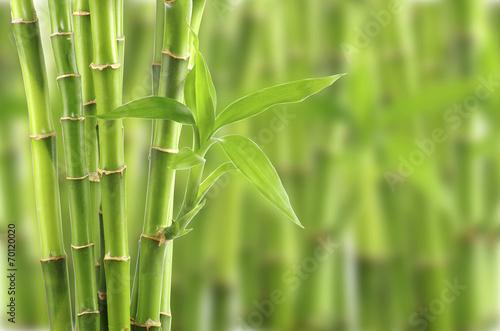 Foto op Aluminium Planten bamboo