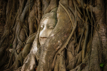 Head of ancient Buddha surrounded by the roots of a tree