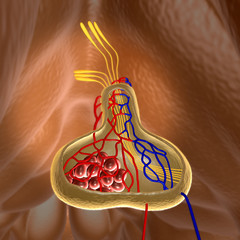 pituitary, pituitary gland