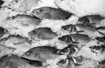 School Of Fish On Ice