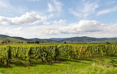 Village, vigne et route des vins