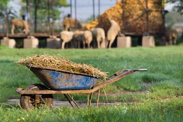 Natural manure