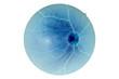 Постер, плакат: Human eye anatomy retina optic disc artery and vein etc