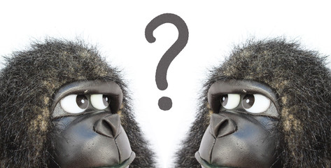 Gorillas thinking