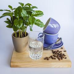 Blue coffee cups, coffee tree and fried coffee grains