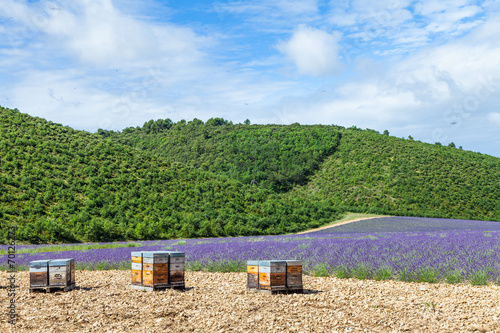 canvas print picture Beehive close to lavander field