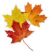 Basic_Autumn_Leaves - 70126859
