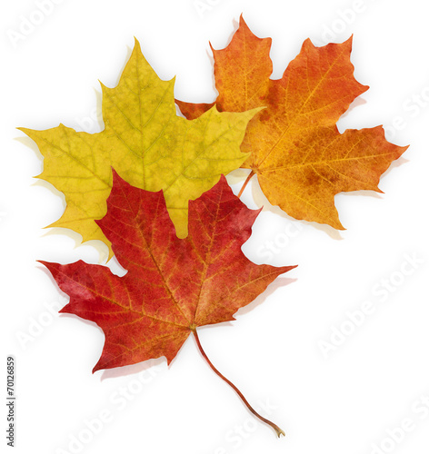 Spoed canvasdoek 2cm dik Bomen Basic_Autumn_Leaves